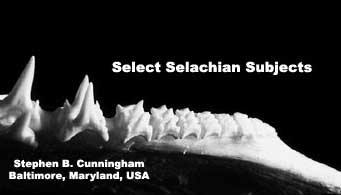 Select Selachian Subjects